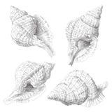 Reeks diverse overzeese shells Royalty-vrije Stock Foto