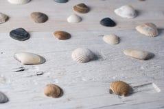 Reeks diverse overzeese shells op een houten witte achtergrond Royalty-vrije Stock Afbeelding