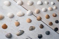 Reeks diverse overzeese shells op een houten witte achtergrond Stock Foto