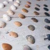 Reeks diverse overzeese shells op een houten witte achtergrond Royalty-vrije Stock Foto