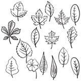 Reeks diverse types van hand getrokken bladeren Royalty-vrije Stock Foto's