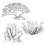 Reeks diverse zwart-witte koralen van het contourbeeldverhaal Het voorwerp is afzonderlijk van de achtergrond vector illustratie