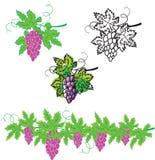 Reeks druiven met bladeren royalty-vrije illustratie