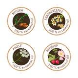 Reeks etherische oliënetiketten Mirre, anijsplant, rozebottel, wierookhars Stock Fotografie
