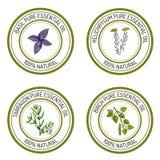 Reeks etherische olieetiketten: basilicum; dragon; berk; helichrysum stock illustratie