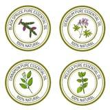 Reeks etherische olieetiketten: zwarte sparren, geranium, kaneel, m Stock Fotografie