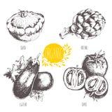 Reeks - fruit en kruiden Het gezicht van Hand-drawn vrouwen illustration schets Gezond voedsel stock illustratie