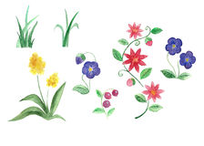 Reeks geïsoleerd waterverfgras, bloemen en bessen Royalty-vrije Stock Afbeeldingen