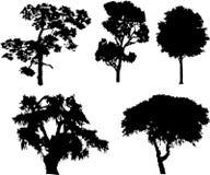 Reeks geïsoleerde bomen - 15 Stock Foto's