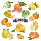 Reeks geïsoleerde citrusvruchten Stock Foto's