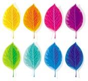 Reeks gekleurde bladeren Royalty-vrije Stock Afbeelding