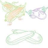 Reeks getrokken dudovich groenten Stock Afbeelding