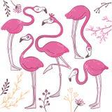 Reeks grappige hand getrokken flamingo's Stock Fotografie