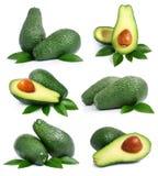 Reeks groene avocadovruchten met blad stock afbeelding