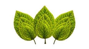 Reeks groene bladeren stock foto's