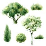 Reeks groene bomen en struiken Stock Foto