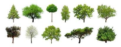 Reeks groene die bomen op witte achtergrond wordt geïsoleerd stock fotografie