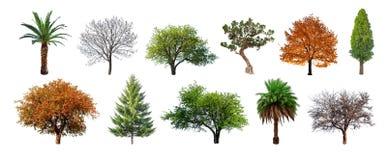 Reeks groene die bomen op witte achtergrond wordt geïsoleerd stock afbeeldingen