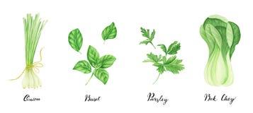 Reeks groene groenten met het van letters voorzien: ui, peterselie, basilicum en bok choy, waterverf het schilderen stock illustratie
