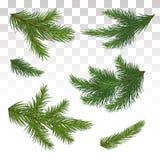 Reeks groene pijnboomtakken Geïsoleerde Kerstmis decor Chri vector illustratie