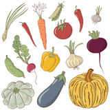 Reeks groenten Stock Fotografie