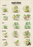 Reeks groenten met drie stadia van hun groei Reeks 2 vector illustratie
