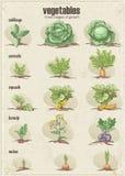 Reeks groenten met drie stadia van hun groei Set1 royalty-vrije illustratie