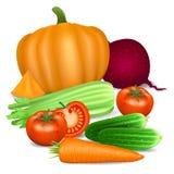 Reeks groenten Tomaat, wortel, pompoen, komkommer, selderie Royalty-vrije Stock Afbeelding