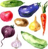 Reeks groenten van de waterverftekening Stock Afbeeldingen