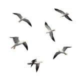 Reeks grote vliegende die zeemeeuwen op wit wordt geïsoleerd Royalty-vrije Stock Foto's