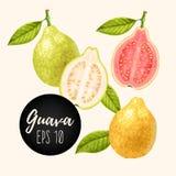 Reeks guavevruchten Royalty-vrije Stock Afbeelding