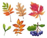 Reeks hand geschilderde waterverfbladeren, vruchten en takken Royalty-vrije Stock Fotografie