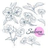 Reeks hand getrokken Japanse bloemen van bloesemsakura Lijn-kunst stijlillustratie Kleurend boek voor volwassene en kinderen vector illustratie