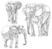 Reeks hand getrokken olifanten Stock Foto
