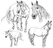 Reeks hand getrokken paarden Stock Afbeeldingen