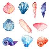 Reeks hand getrokken waterverf overzeese shells Kleurrijke vectordieillustraties op witte achtergrond worden geïsoleerd Stock Foto's