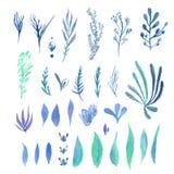 Reeks heldere kleurrijke blauwgroene bladeren Royalty-vrije Stock Afbeeldingen