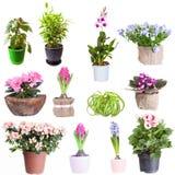 Reeks houseplants stock foto's