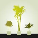 Reeks houseplants Royalty-vrije Stock Foto
