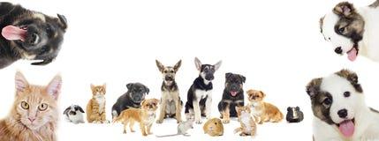 Reeks huisdieren royalty-vrije stock afbeelding
