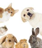 Reeks huisdieren royalty-vrije stock foto's