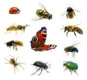Reeks insecten Royalty-vrije Stock Afbeeldingen