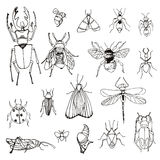Reeks insecten, schets Stock Afbeeldingen