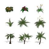 Reeks installaties in isometrische stijl Beeldverhaal tropische boom en varen Geïsoleerd beeld van wildernissenpalm en struik royalty-vrije illustratie