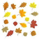 Reeks kleurrijke de herfstbladeren De vectorillustratie van ontwerpelementen Doorbladert in willekeurig Witte achtergrond vector illustratie
