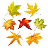 Reeks kleurrijke geïsoleerde de herfstbladeren Stock Foto's