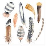 Reeks kleurrijke vogelveren Gestreepte en bevlekte veren De illustratie van de waterverf vector illustratie