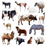 Reeks landbouwbedrijfdieren. Geïsoleerd met schaduw Stock Afbeeldingen