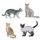 Reeks leuke beeldverhaalpotten of katten vector illustratie