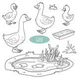 Reeks leuke landbouwbedrijfdieren en voorwerpen, vectorgansfamilie Royalty-vrije Stock Foto's